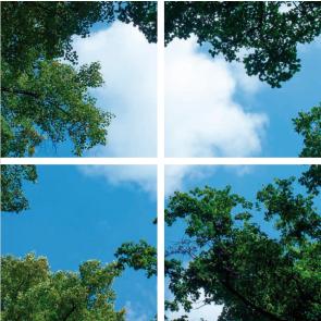 Bos-Wolken plafond complete fotoprint met 4 LED Panelen 36w flikkervrij